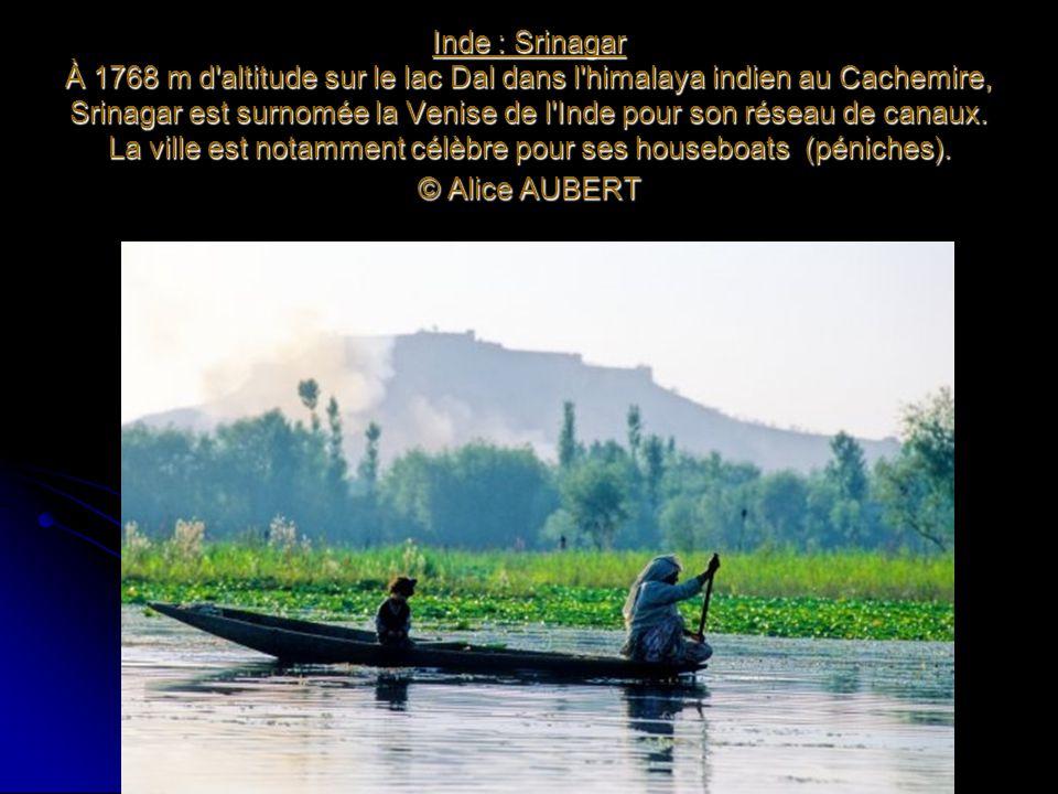 Inde : Srinagar À 1768 m d'altitude sur le lac Dal dans l'himalaya indien au Cachemire, Srinagar est surnomée la Venise de l'Inde pour son réseau de c