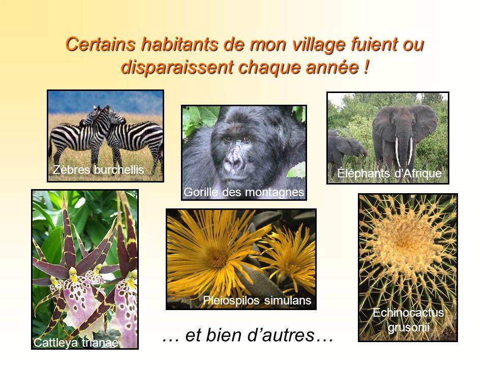 Certains habitants de mon village fuient ou disparaissent chaque année ! Cattleya trianae Zèbres burchellis Gorille des montagnes Éléphants d'Afrique