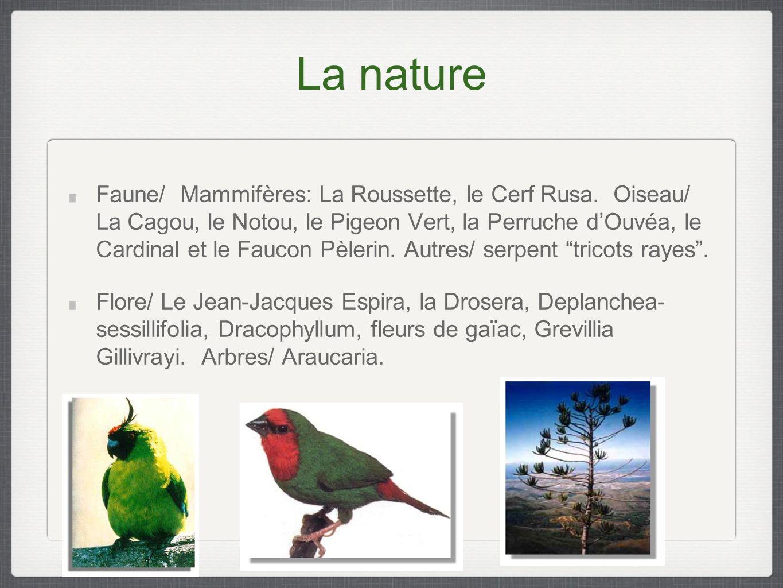La nature Faune/ Mammifères: La Roussette, le Cerf Rusa.