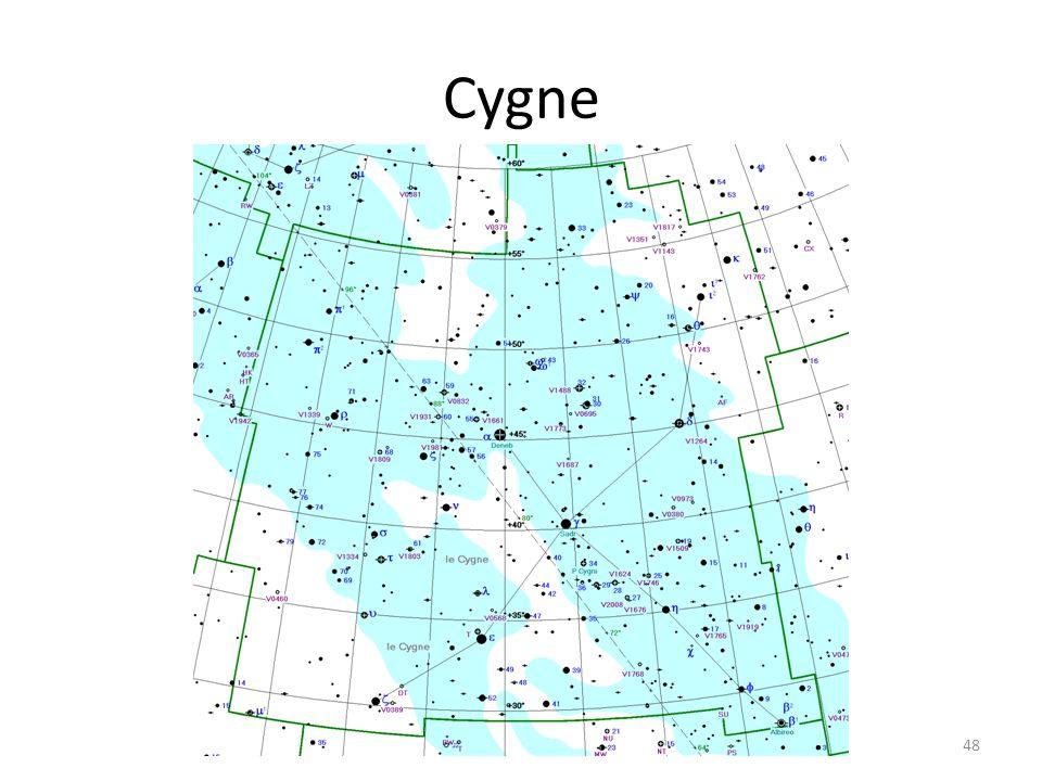 Cygne 48