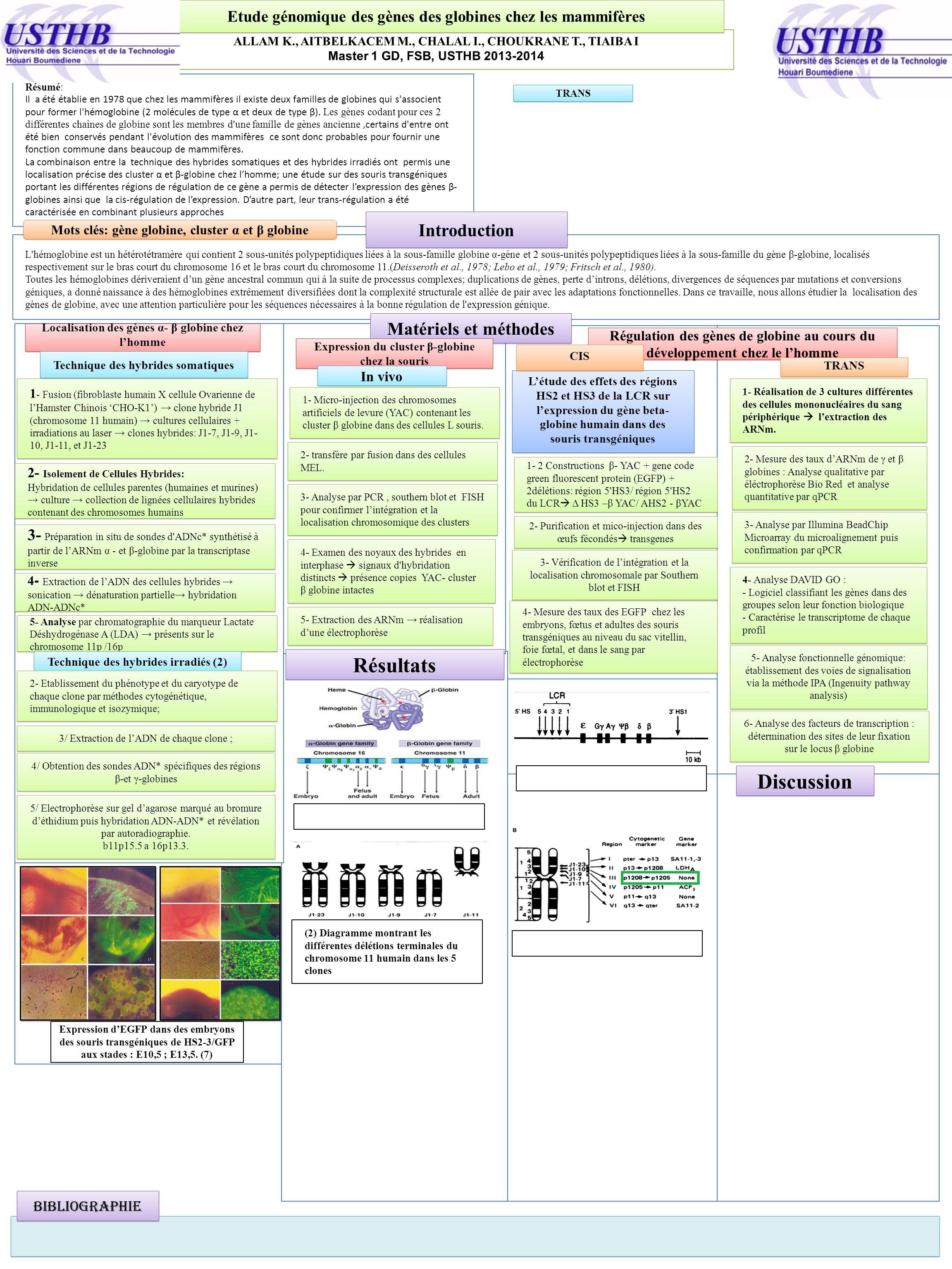 ALLAM K., AITBELKACEM M., CHALAL I., CHOUKRANE T., TIAIBA I Master 1 GD, FSB, USTHB 2013-2014 Etude génomique des gènes des globines chez les mammifèr