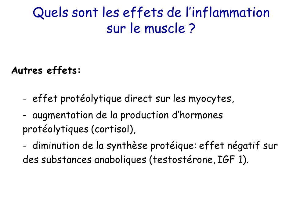 Quels sont les effets de l'inflammation sur le muscle ? Autres effets: - effet protéolytique direct sur les myocytes, - augmentation de la production