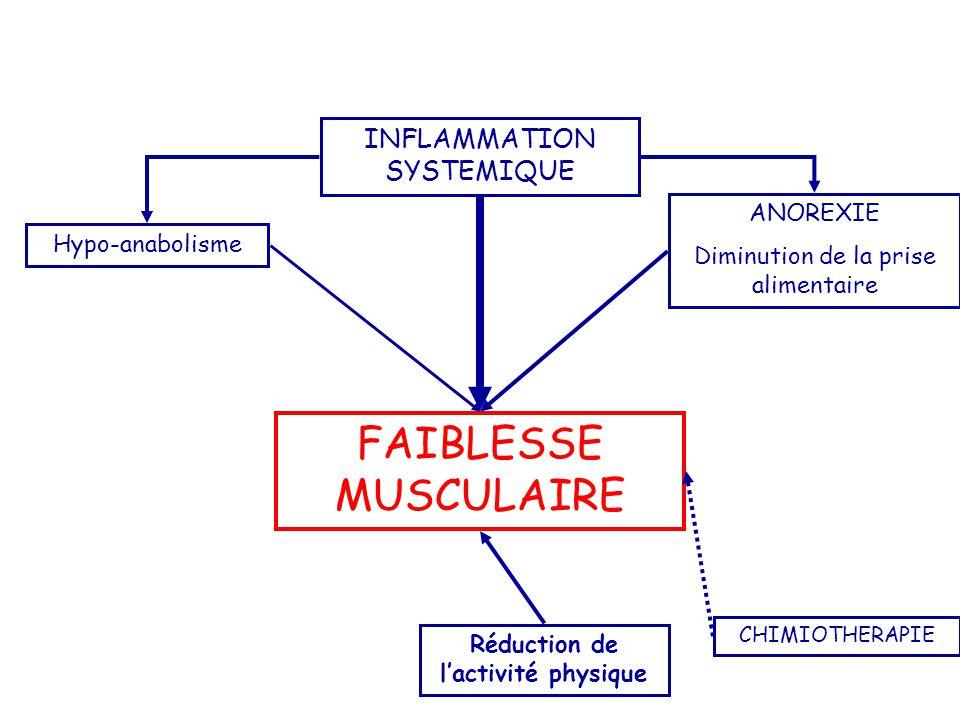 FAIBLESSE MUSCULAIRE INFLAMMATION SYSTEMIQUE ANOREXIE Diminution de la prise alimentaire Réduction de l'activité physique CHIMIOTHERAPIE Hypo-anabolis