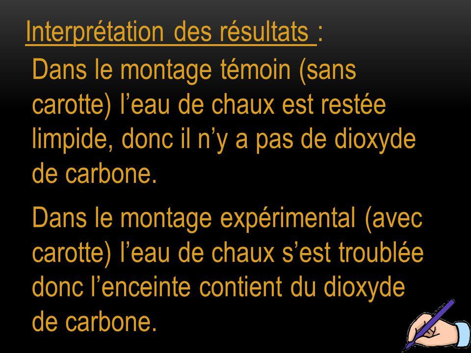 Interprétation des résultats : Dans le montage témoin (sans carotte) l'eau de chaux est restée limpide, donc il n'y a pas de dioxyde de carbone. Dans