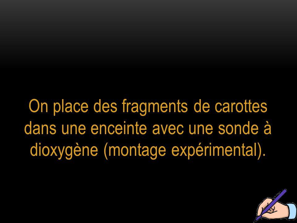 On place des fragments de carottes dans une enceinte avec une sonde à dioxygène (montage expérimental).