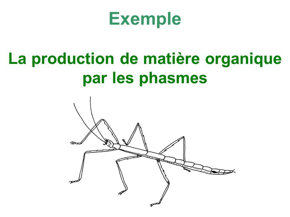 La production de matière organique par les phasmes Exemple