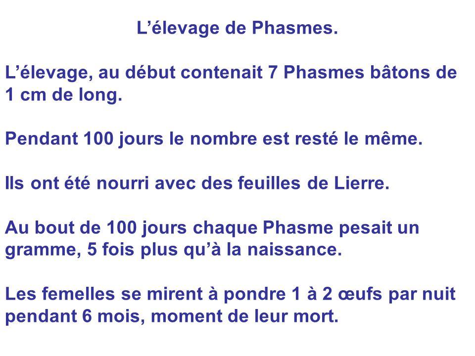 L'élevage de Phasmes. L'élevage, au début contenait 7 Phasmes bâtons de 1 cm de long. Pendant 100 jours le nombre est resté le même. Ils ont été nourr