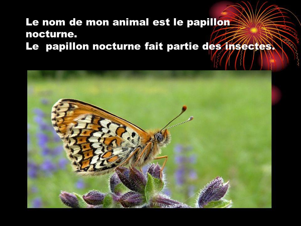 Le nom de mon animal est le papillon nocturne. Le papillon nocturne fait partie des insectes.