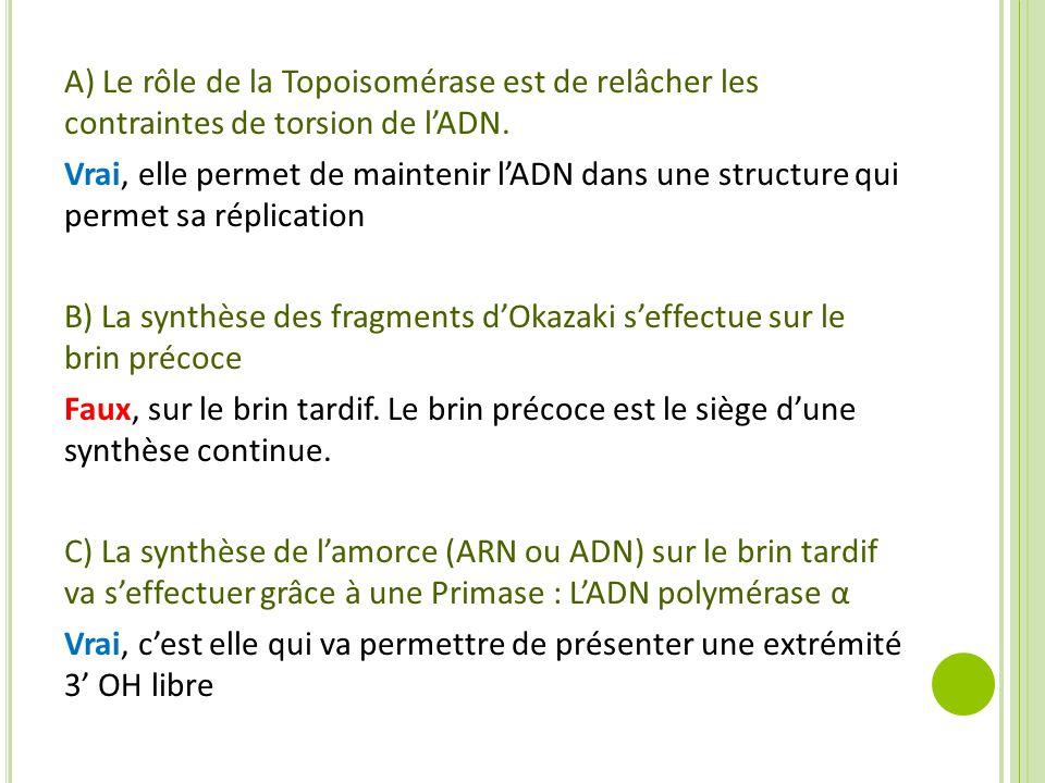 A) Le rôle de la Topoisomérase est de relâcher les contraintes de torsion de l'ADN. Vrai, elle permet de maintenir l'ADN dans une structure qui permet