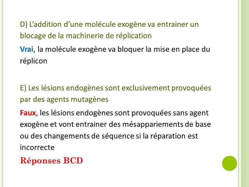 D) L'addition d'une molécule exogène va entrainer un blocage de la machinerie de réplication Vrai, la molécule exogène va bloquer la mise en place du