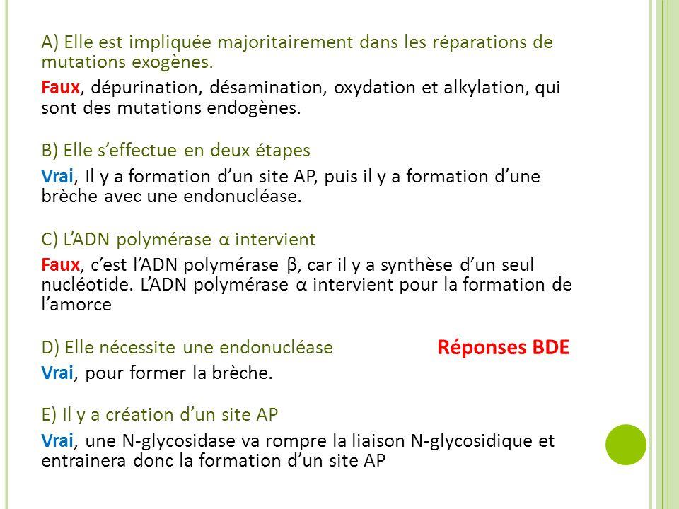 A) Elle est impliquée majoritairement dans les réparations de mutations exogènes. Faux, dépurination, désamination, oxydation et alkylation, qui sont