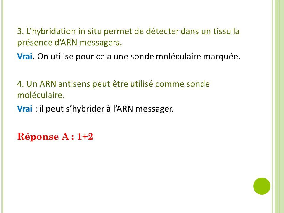 3.L'hybridation in situ permet de détecter dans un tissu la présence d'ARN messagers.