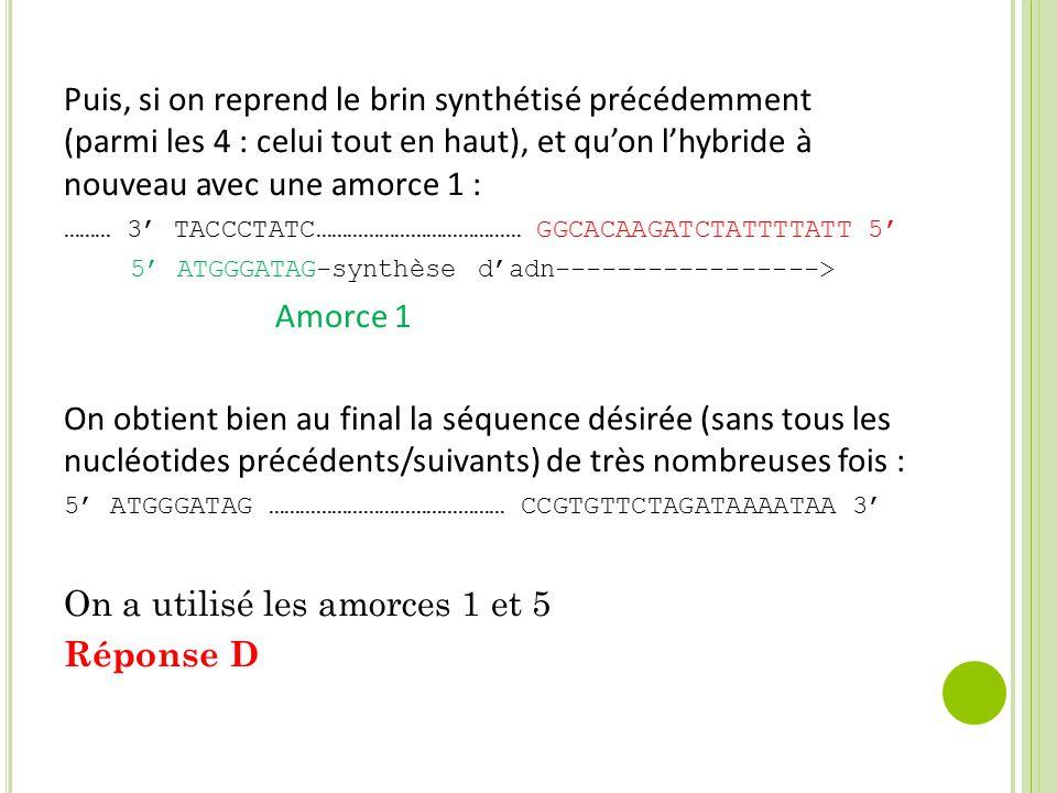 Puis, si on reprend le brin synthétisé précédemment (parmi les 4 : celui tout en haut), et qu'on l'hybride à nouveau avec une amorce 1 : ……… 3' TACCCTATC………………………………… GGCACAAGATCTATTTTATT 5' 5' ATGGGATAG-synthèse d'adn-----------------> Amorce 1 On obtient bien au final la séquence désirée (sans tous les nucléotides précédents/suivants) de très nombreuses fois : 5' ATGGGATAG ……………………………………… CCGTGTTCTAGATAAAATAA 3' On a utilisé les amorces 1 et 5 Réponse D