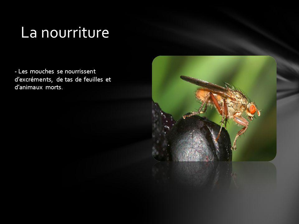 - Les mouches se nourrissent d'excréments, de tas de feuilles et d'animaux morts. La nourriture