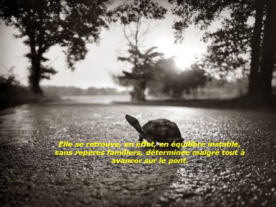 L'histoire le dit: la tortue fait bientôt un faux pas et se retrouve sur le dos.