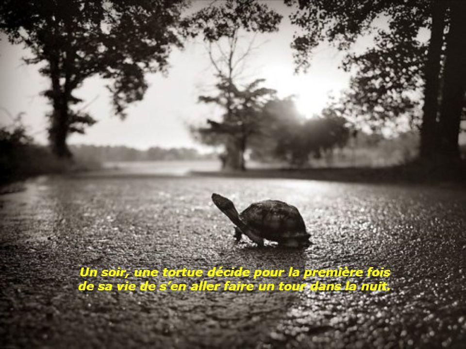Dans cette histoire italienne, le dialogue se tient entre une tortue et un crapaud sous un pont tout au bord d'une rivière.