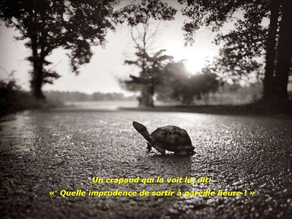 Un soir, une tortue décide pour la première fois de sa vie de s'en aller faire un tour dans la nuit.