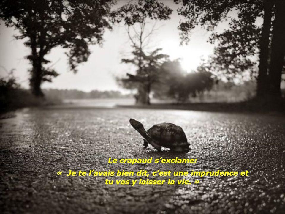 Mais la tortue continue son chemin sans se soucier des bons conseils de son ami.
