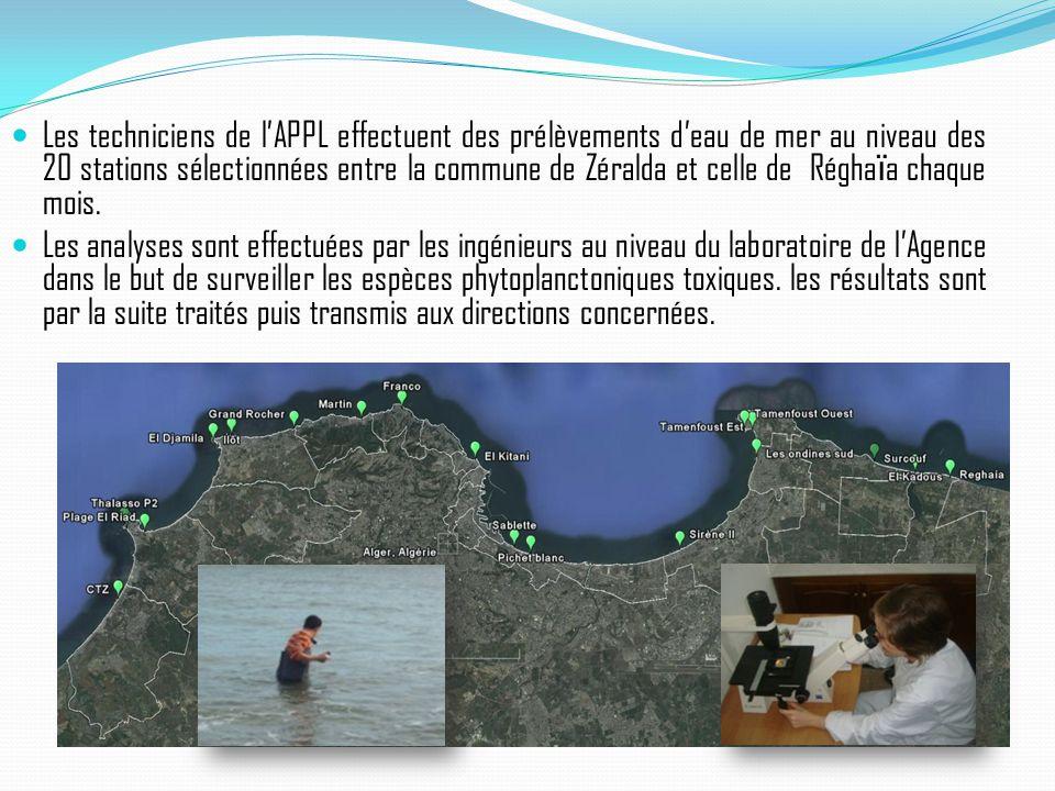 Les techniciens de l'APPL effectuent des prélèvements d'eau de mer au niveau des 20 stations sélectionnées entre la commune de Zéralda et celle de Rég