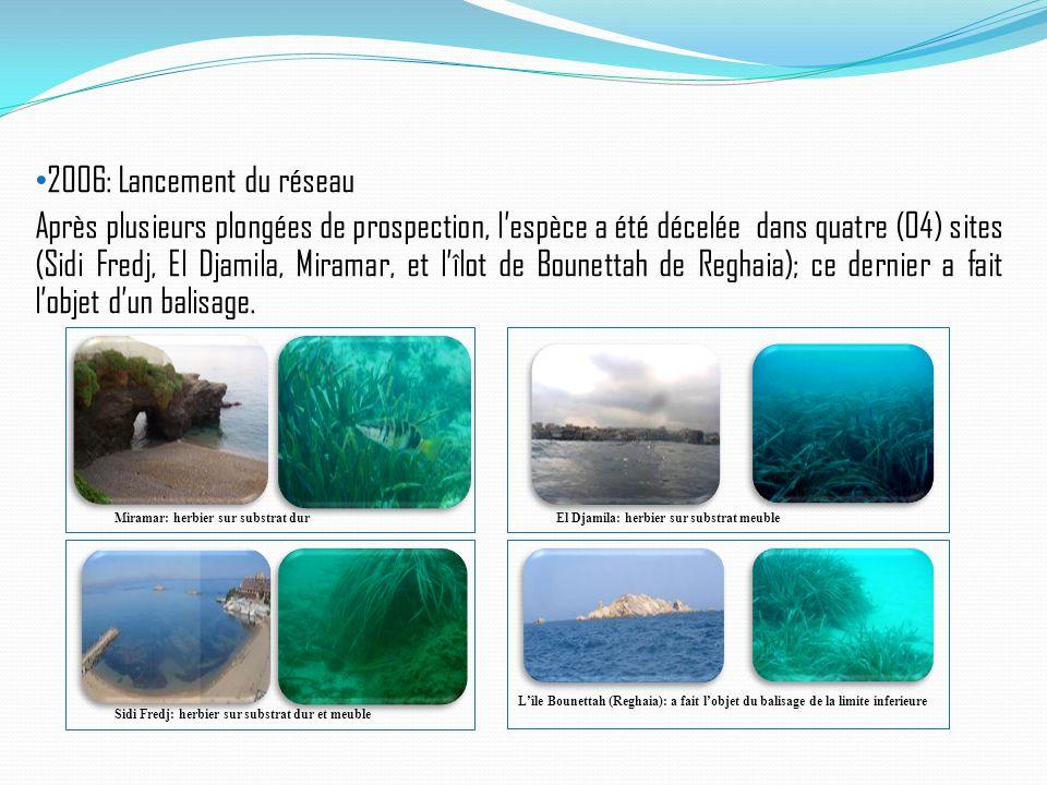 2006: Lancement du réseau Après plusieurs plongées de prospection, l'espèce a été décelée dans quatre (04) sites (Sidi Fredj, El Djamila, Miramar, et