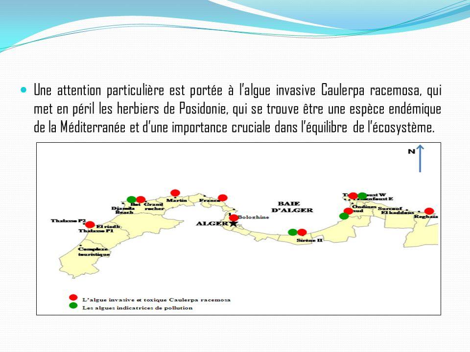 Une attention particulière est portée à l'algue invasive Caulerpa racemosa, qui met en péril les herbiers de Posidonie, qui se trouve être une espèce