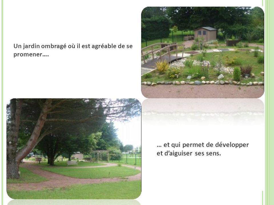 Un jardin ombragé où il est agréable de se promener….