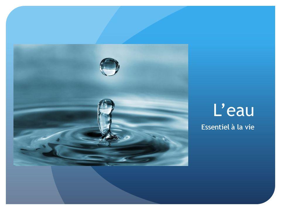 L'eau Essentiel à la vie