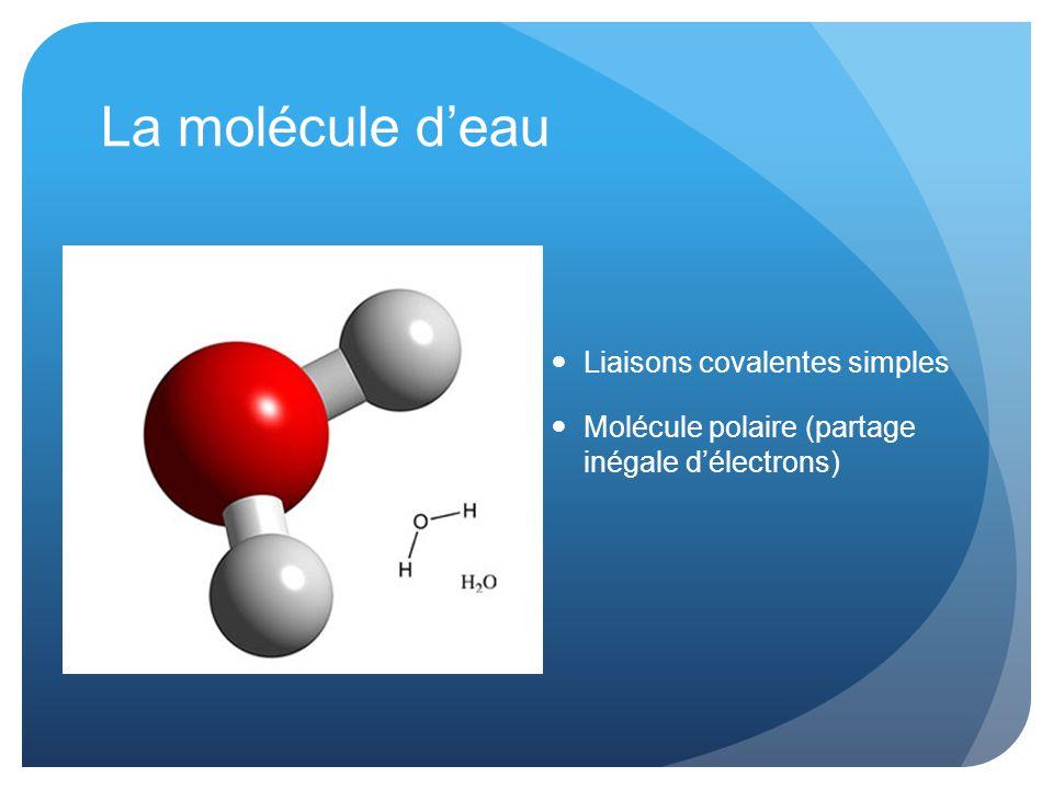 La molécule d'eau Liaisons covalentes simples Molécule polaire (partage inégale d'électrons)