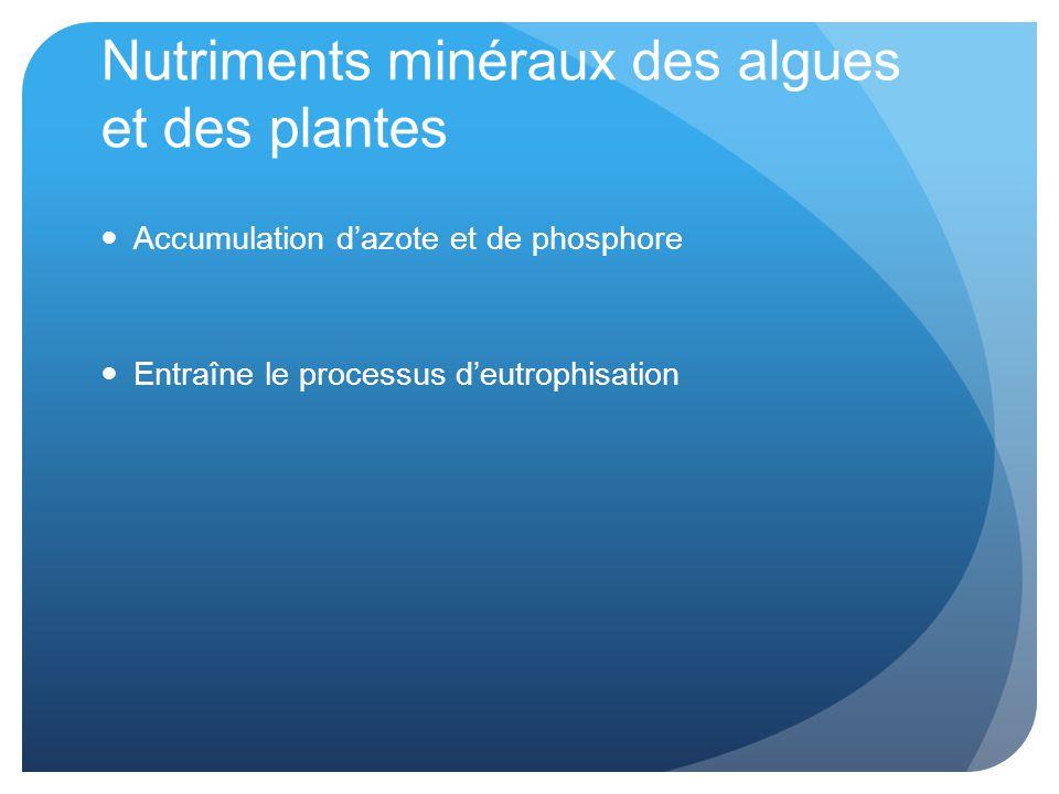 Nutriments minéraux des algues et des plantes Accumulation d'azote et de phosphore Entraîne le processus d'eutrophisation