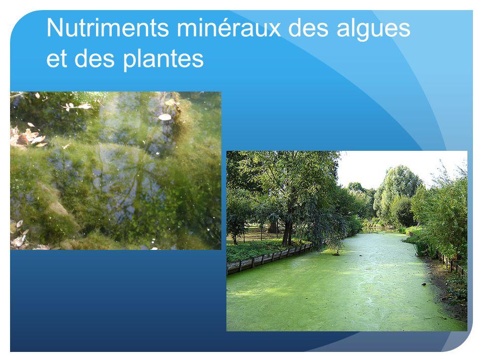 Nutriments minéraux des algues et des plantes