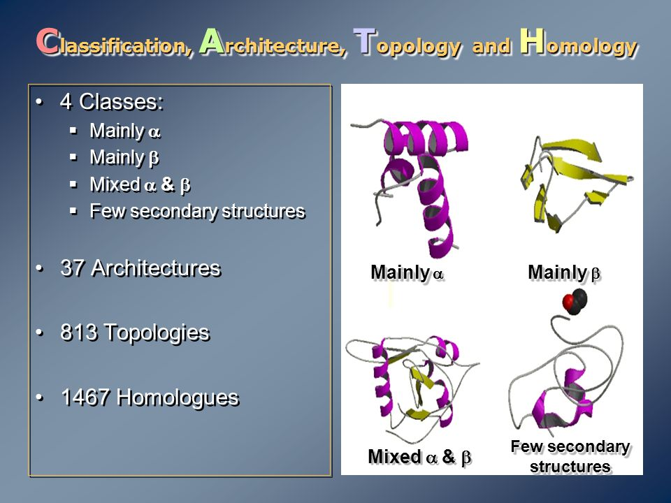 C lassification, A rchitecture, T opology and H omology 4 Classes:  Mainly   Mainly   Mixed  &   Few secondary structures 37 Architectures 81