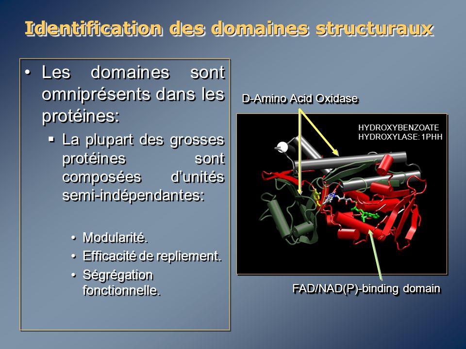 Identification des domaines structuraux Les domaines sont omniprésents dans les protéines:  La plupart des grosses protéines sont composées d'unités
