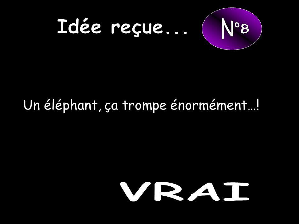 Un éléphant, ça trompe énormément…!