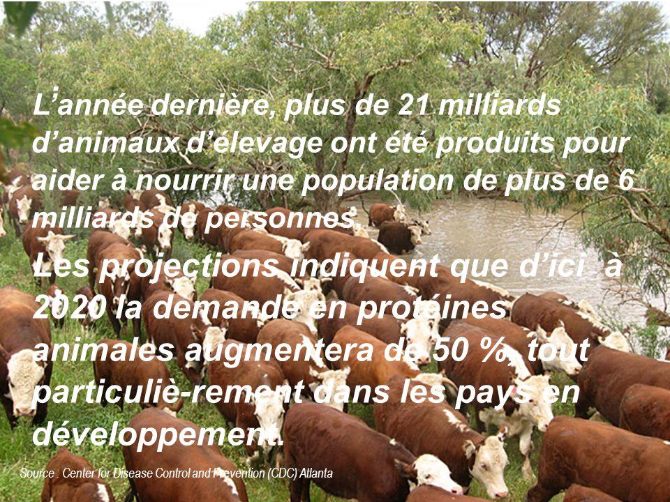 . L'année dernière, plus de 21 milliards d'animaux d'élevage ont été produits pour aider à nourrir une population de plus de 6 milliards de personnes.