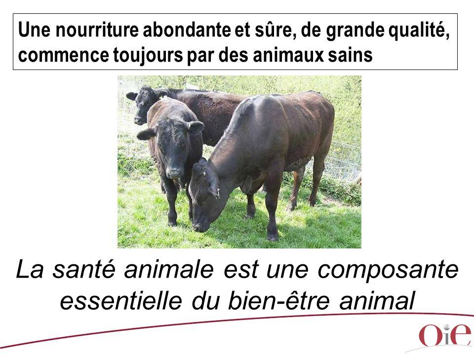 Une nourriture abondante et sûre, de grande qualité, commence toujours par des animaux sains La santé animale est une composante essentielle du bien-ê