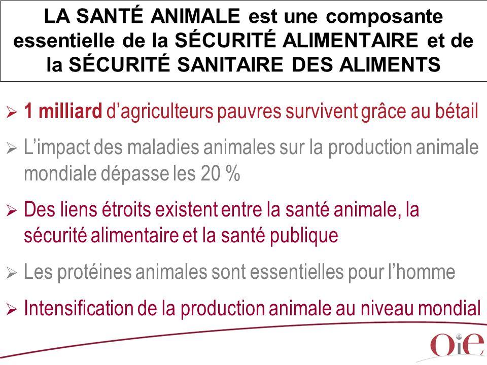  1 milliard d'agriculteurs pauvres survivent grâce au bétail  L'impact des maladies animales sur la production animale mondiale dépasse les 20 %  D