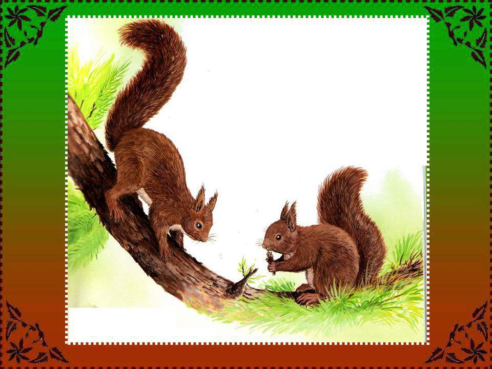 Les renards sont-ils de bons parents .Le renard a quatre à six renardeaux par an.