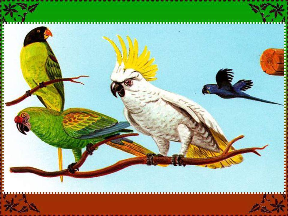 LE COLIBRI Le colibri peut-il voler en arrière .