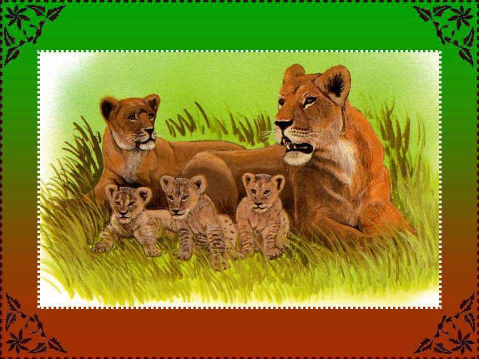 LE GUÉPARD Le guépard est-il l'animal le plus rapide .