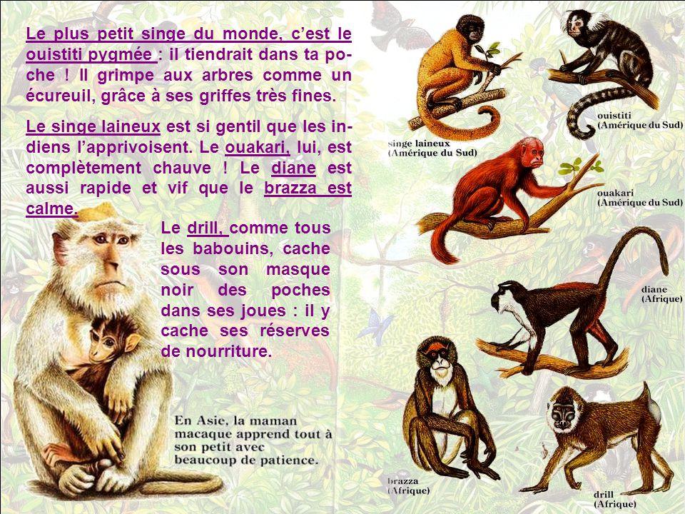 La forêt tropicale, chaude, humide et touffue, est le royaume des petits singes. Ils la parcou- rent en bandes bruyantes et joyeuses. Ces singes-écure