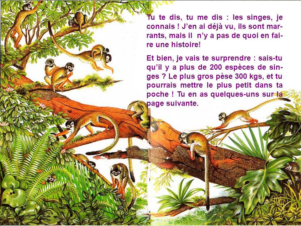 Comment les singes avan- cent-ils .Comme de vrais trapézistes .