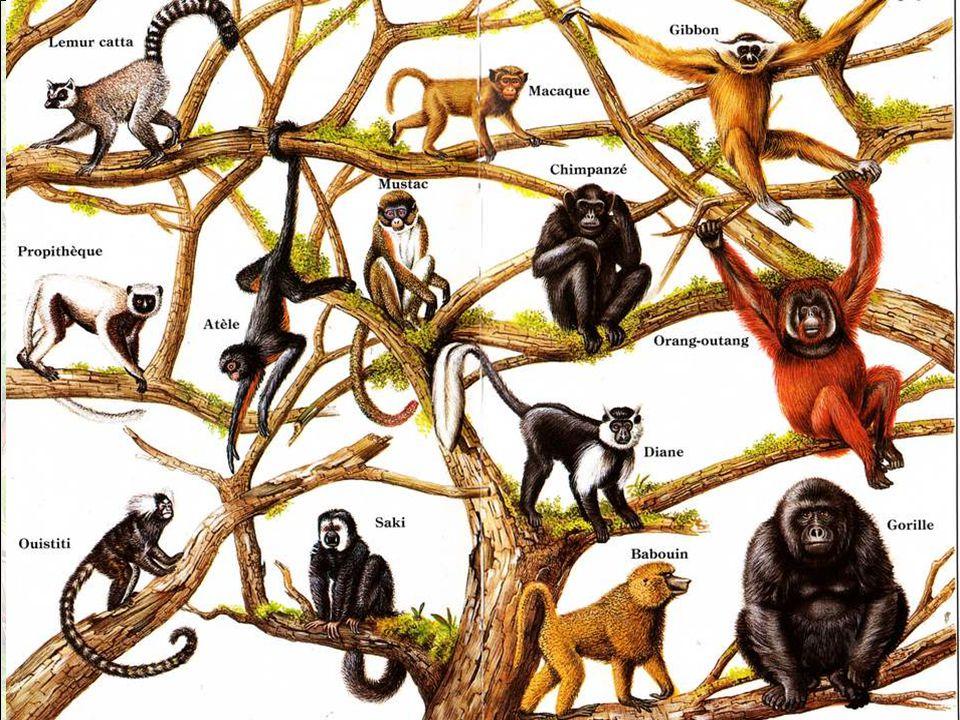 Tu te dis, tu me dis : les singes, je connais .