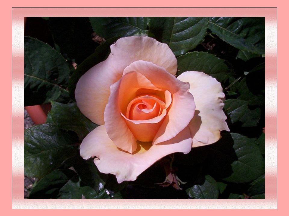 Le Respect C est de glorifier par des louanges… Dans l importance de nos échanges… C est de s incliner avec noblesse… Devant la puissance et la sagesse… C est d ouvrir son cœur avec sincérité…
