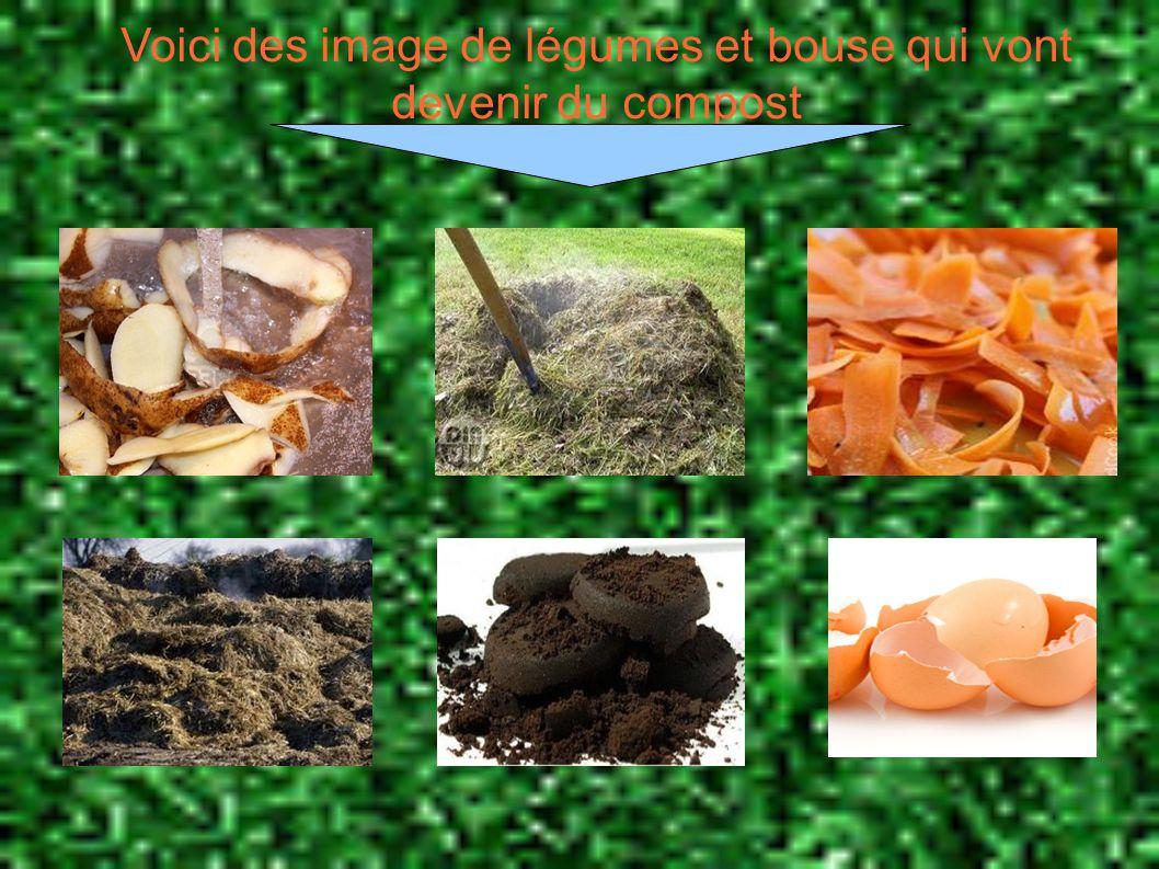 Voici des image de légumes et bouse qui vont devenir du compost