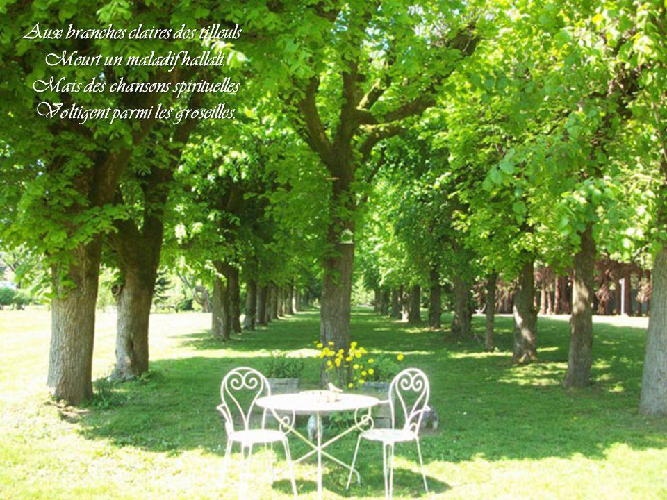 Aux branches claires des tilleuls Meurt un maladif hallali.