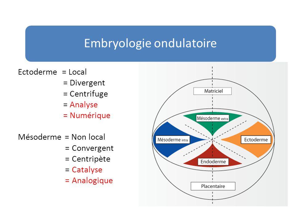 Ectoderme = Local = Divergent = Centrifuge = Analyse = Numérique Mésoderme = Non local = Convergent = Centripète = Catalyse = Analogique Embryologie o