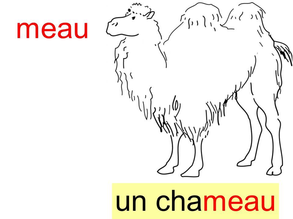 instit90 chameau un chameau meau