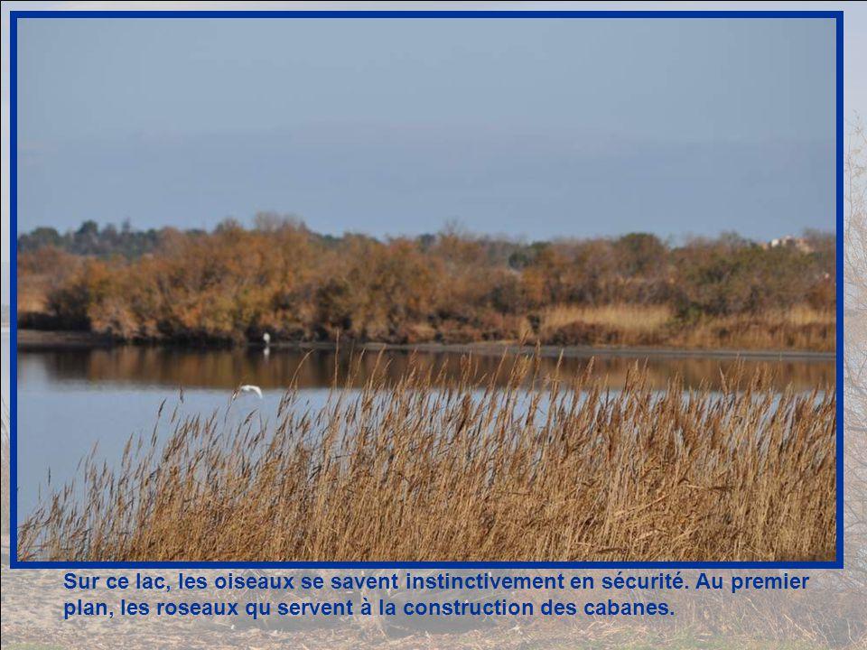 Du bord du lac, une vue splendide sur le Canigou.