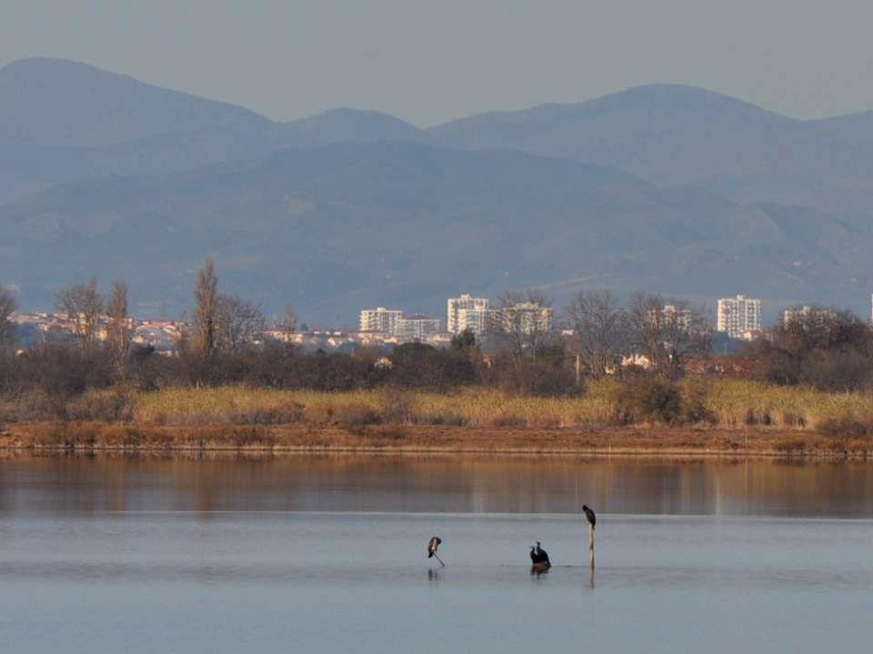 Sur ce lac, les oiseaux se savent instinctivement en sécurité.