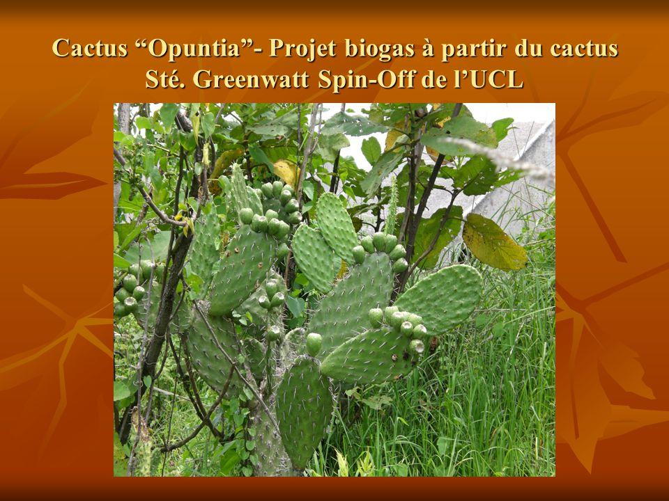 """Cactus """"Opuntia""""- Projet biogas à partir du cactus Sté. Greenwatt Spin-Off de l'UCL"""